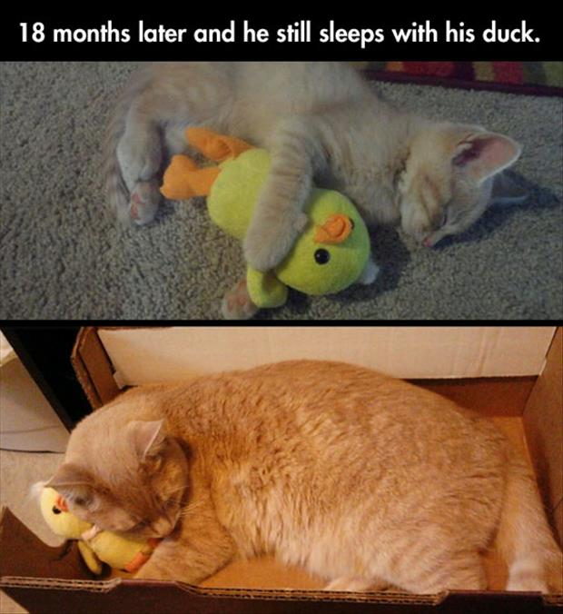 cat sleeps with stuffed animal
