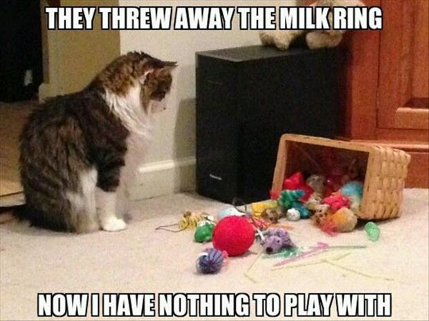 cats love the milk ring