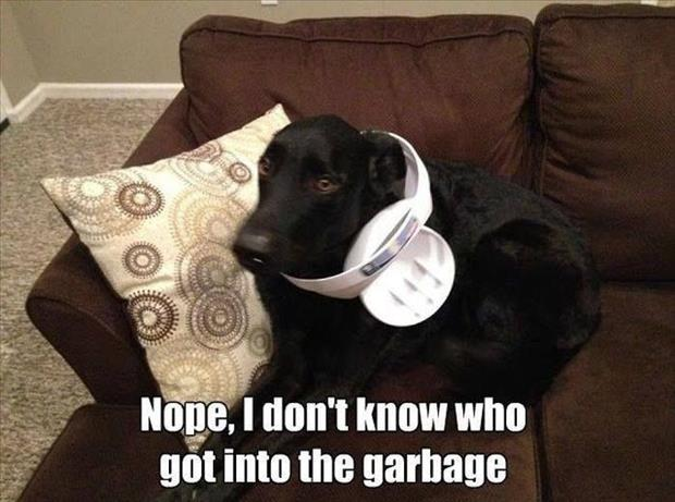 dog got in the garbage