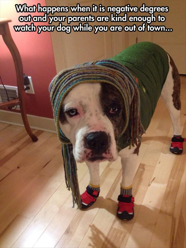 dressing your dog up