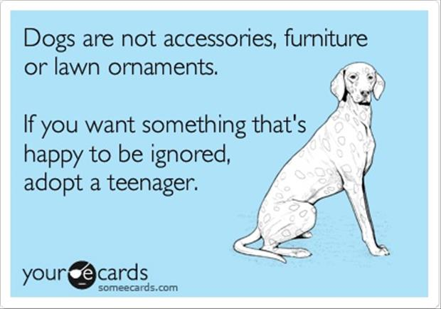 funny adopt a teenager