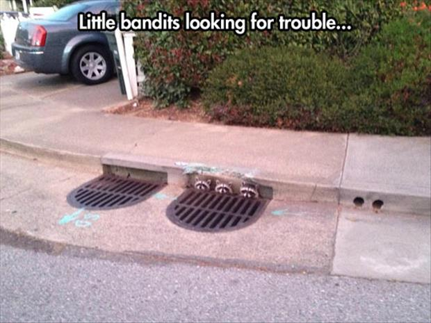 funny bandits looking for trouble