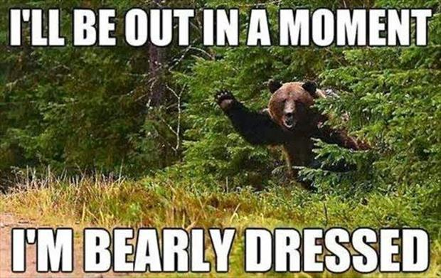 funny bear jokes