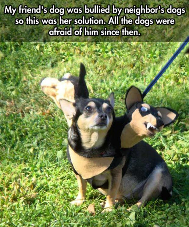 funny bullied dogs
