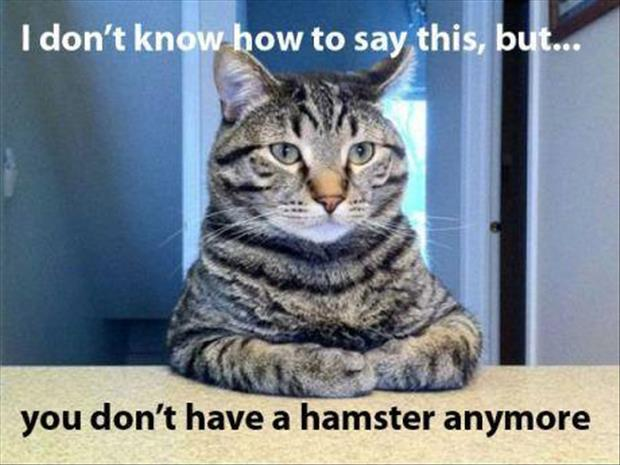 funny cat ate your hamster