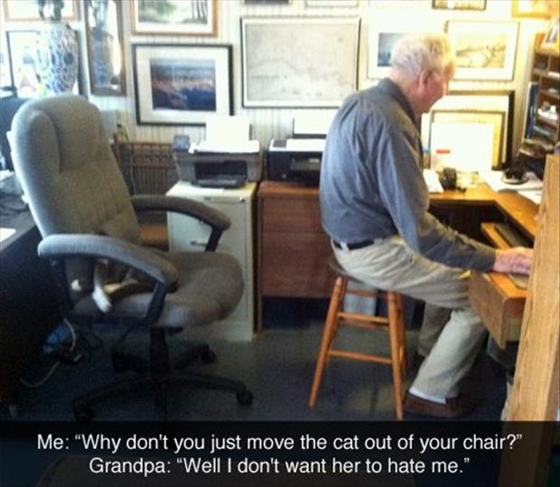 funny cat sitting in your chair