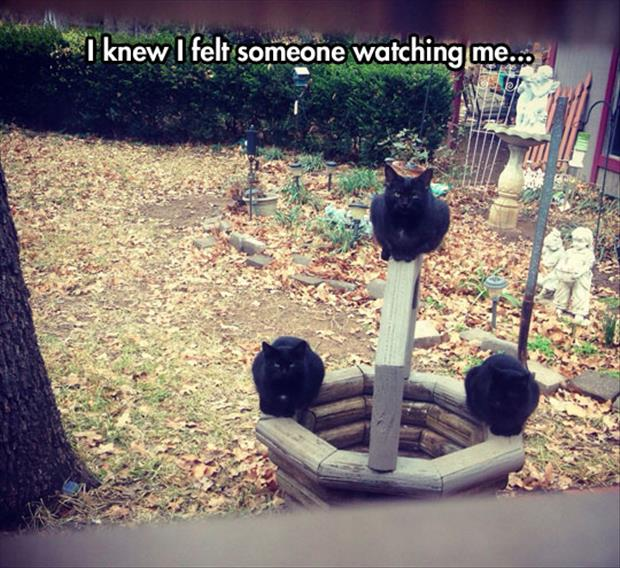 funny cats watching me