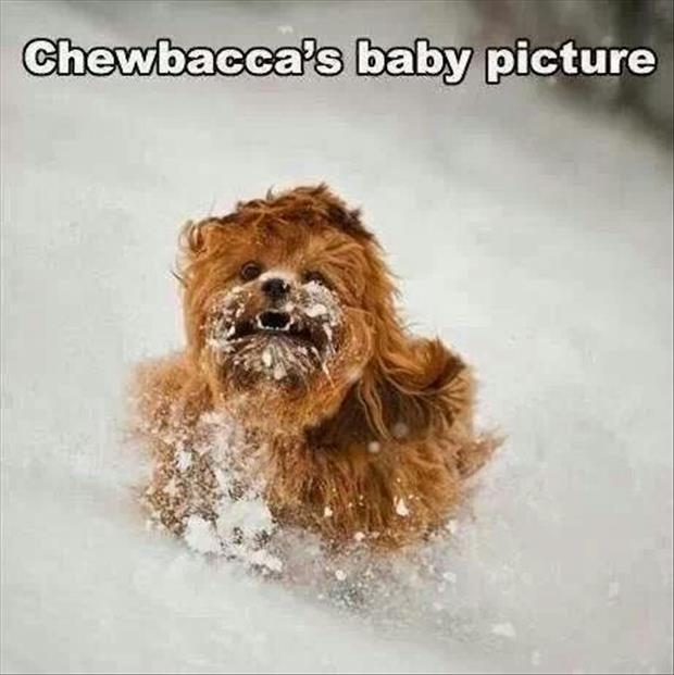 funny chewbacca's baby picture