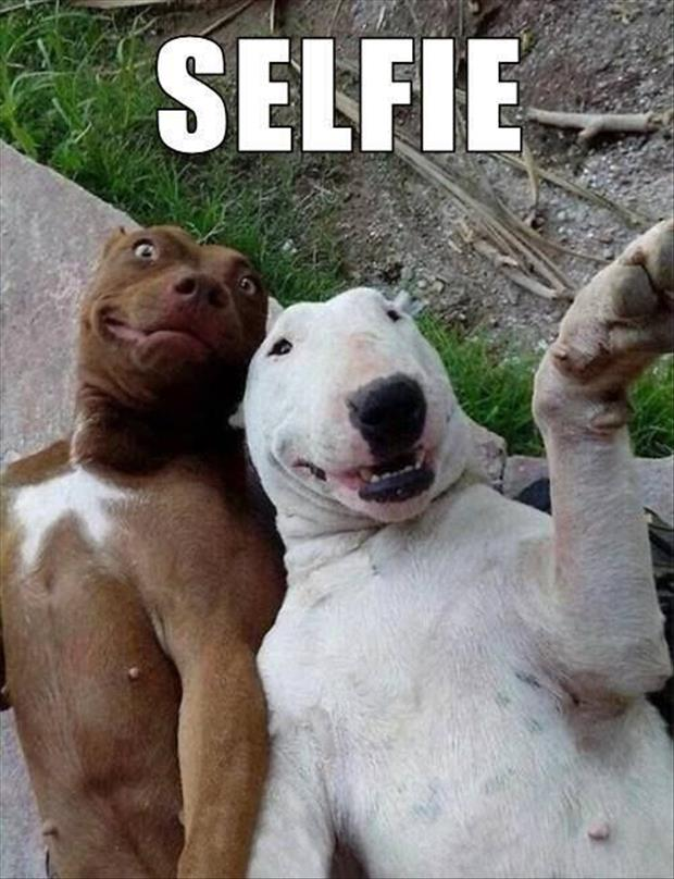 funny dog selphie