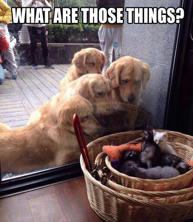 funny dogs looking at cats