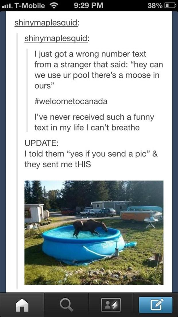 funny moose in my pool