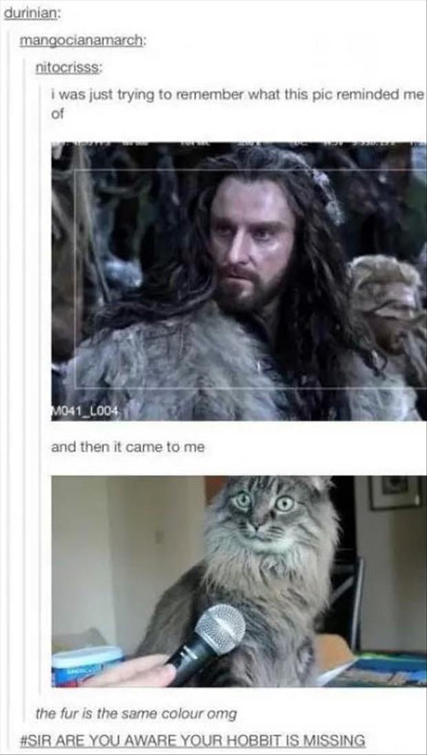 funny picture of hobbit cat