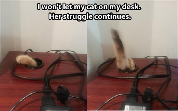 funny pictures (36)