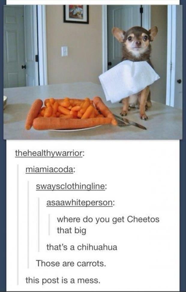 funny puppy and cheetos carrots