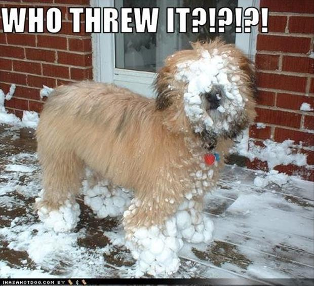 funny winter pictures (1)