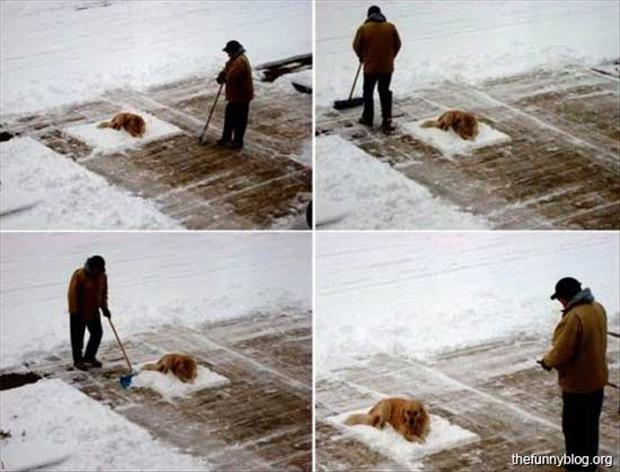funny winter pictures (18)