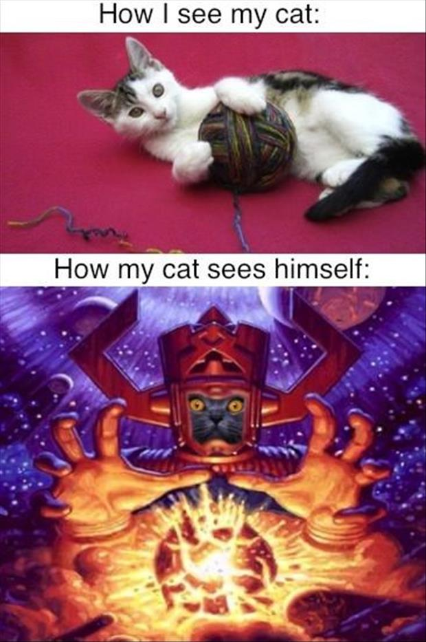 how I see a cat