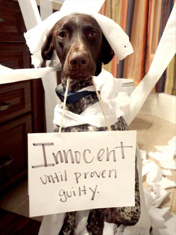 innocent dog shaming