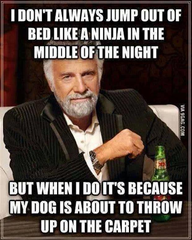 ninja in the night