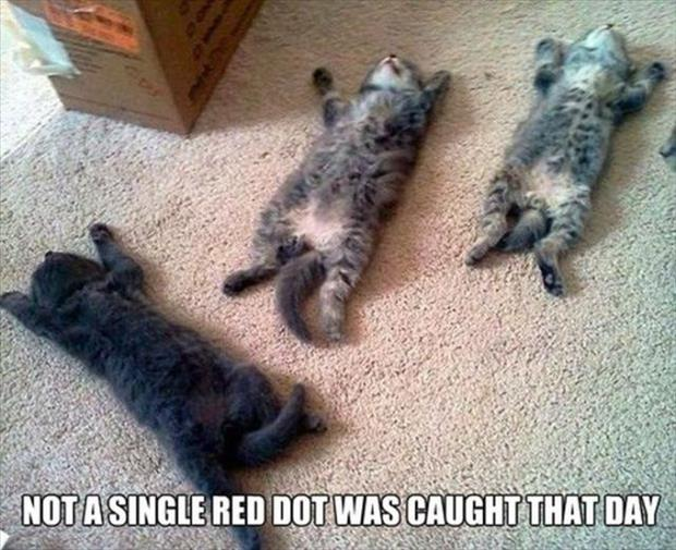 not a single red dot was caught that day