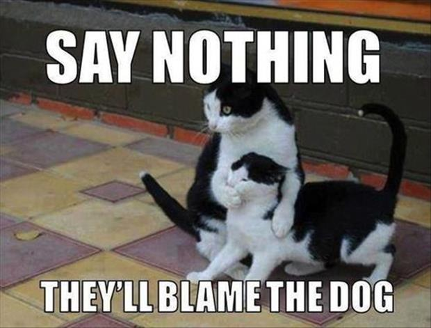 say nothing they will blame the dog