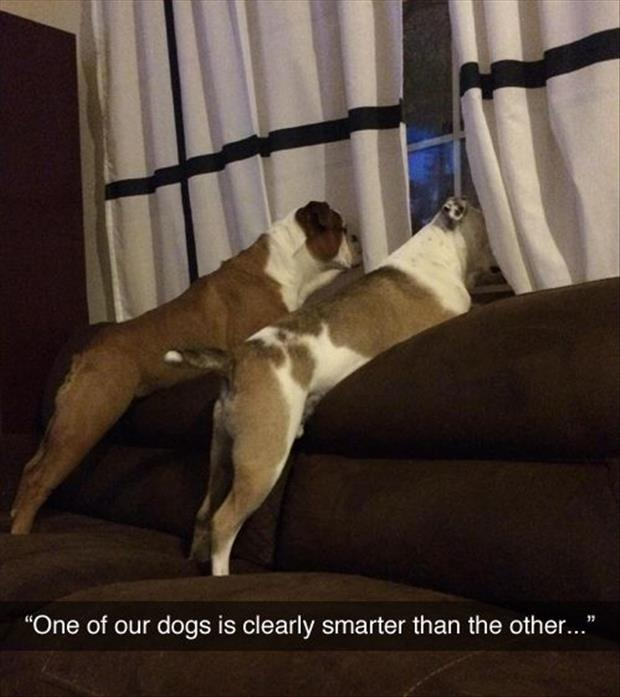 smart dogs