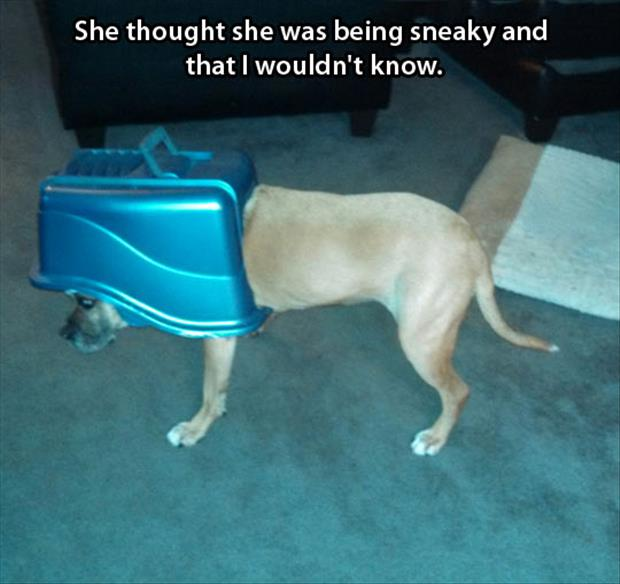 sneaky dog