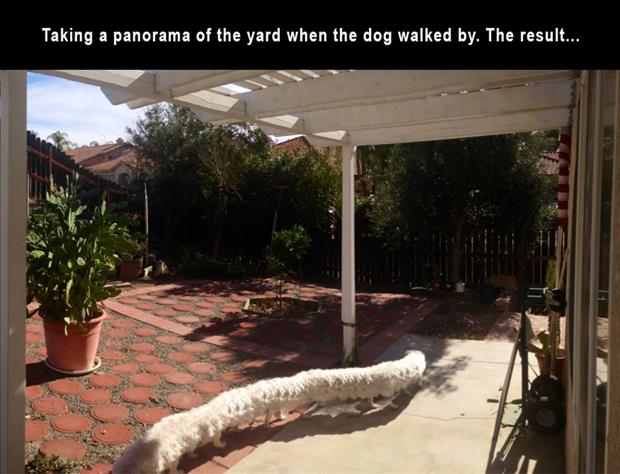 taking a panorama picture