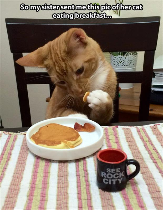 the cat eating pancakes