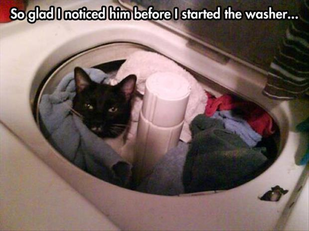 the cat is in the washer