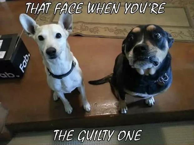the dog is guilty