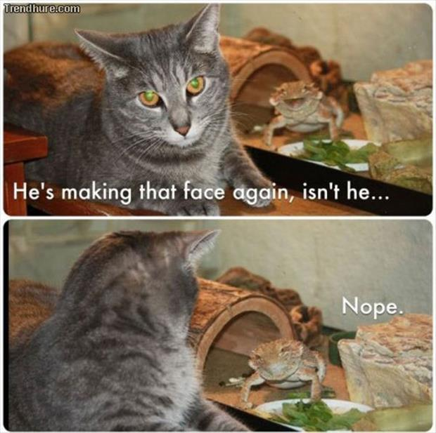 the funny animal pictures (3)