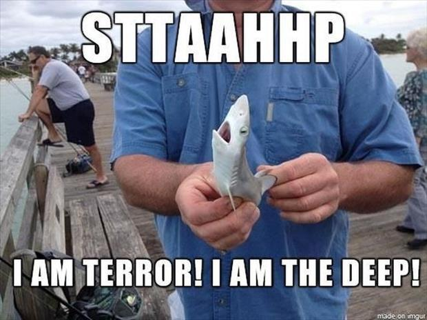 the funny shark