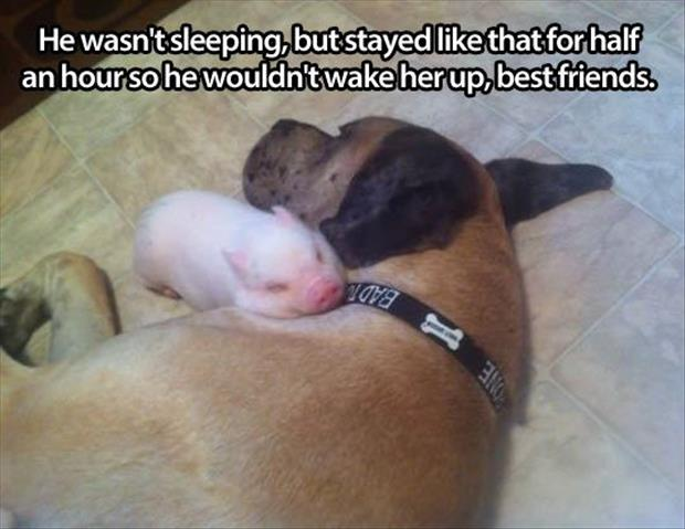 the pig has a best friend in a dog