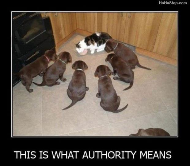 this is what authority means