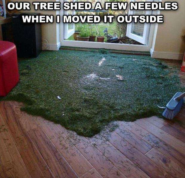 tree shed its needles