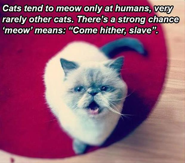 what does meow mean