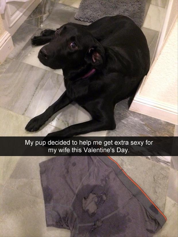 a puppy chewed my boxers