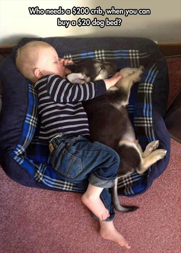 dog bed funny