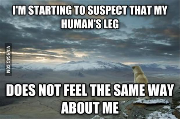 dog loves human leg