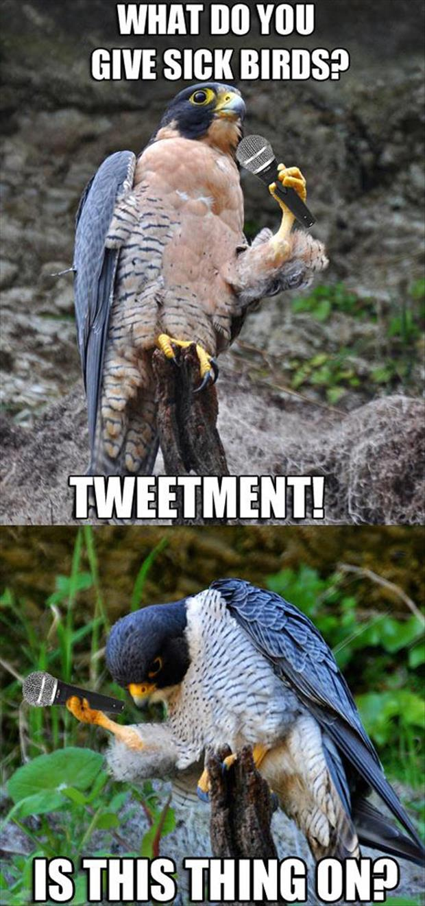 funny bird jokes