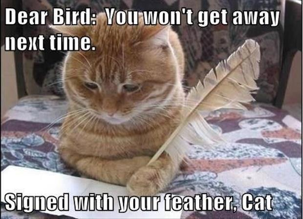 funny cat and bird