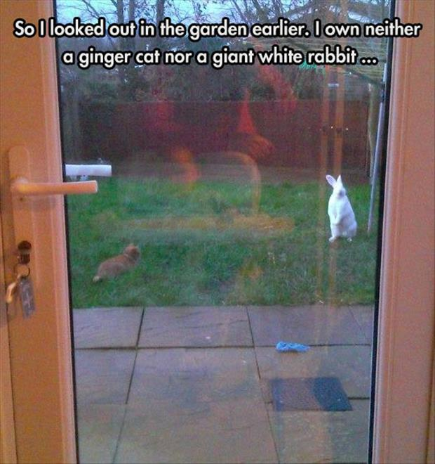 funny cat and bunny rabbit