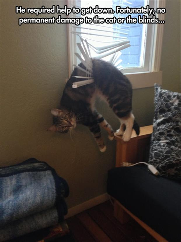 funny cat stuck in the blinds