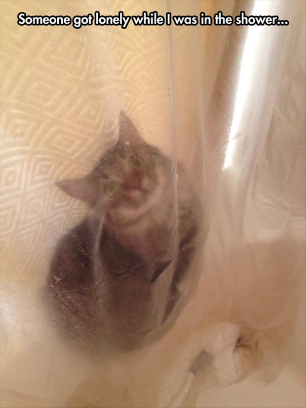 funny cat watching you shower