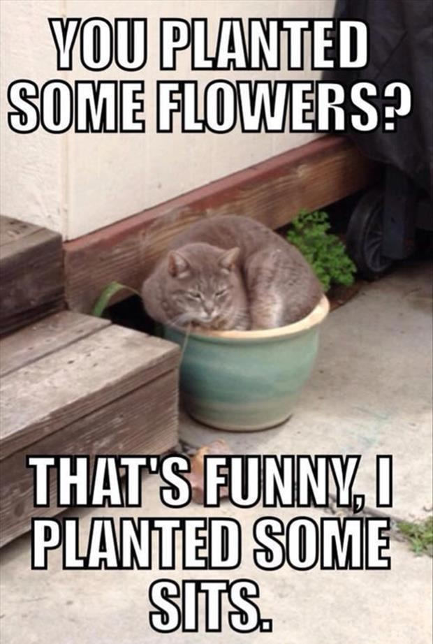 funny cats (26)