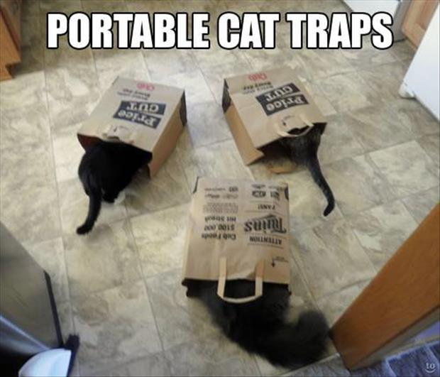 funny cats (33)