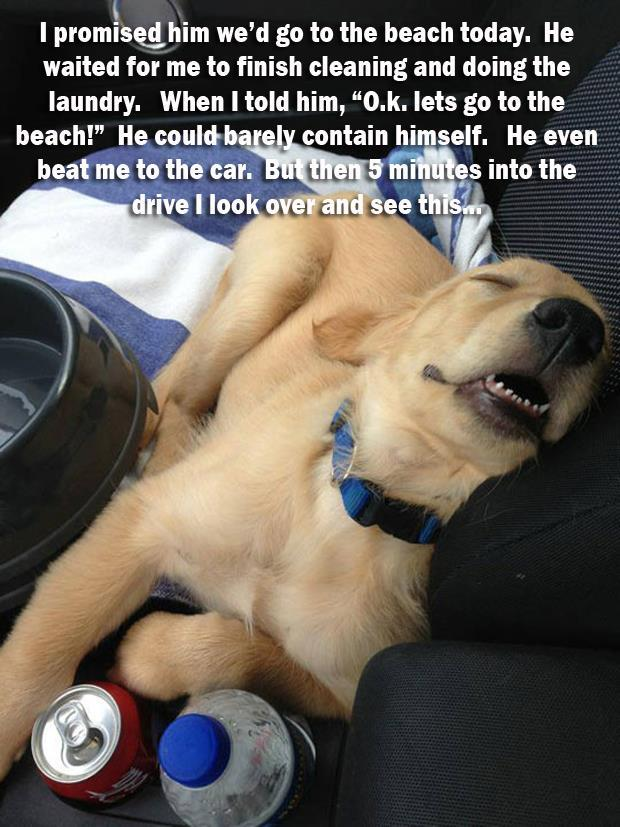 funny dogs (18)