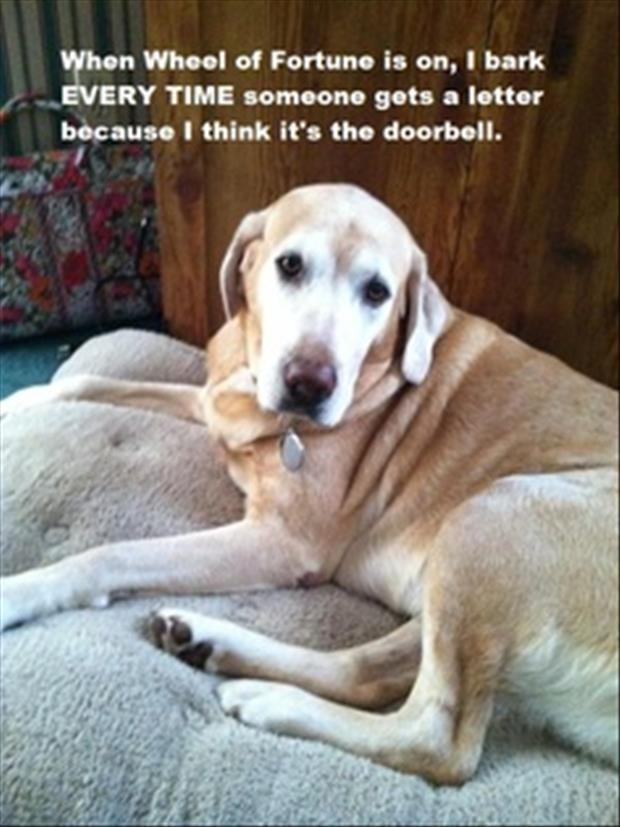 funny dogs (24)
