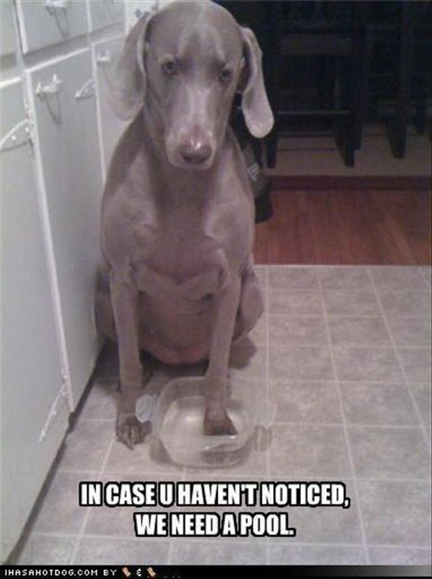 funny dogs (34)